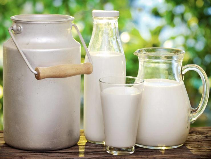 Le lait de cafard, le superaliment du futur